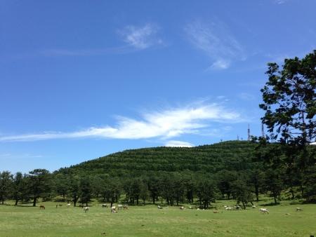 landscape with blue sky in jeju Stock Photo