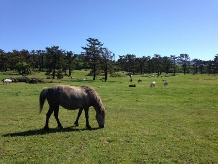 green grassland with pony Stock Photo