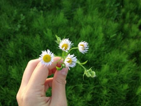 flower in hand Stock Photo
