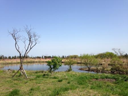 woodland in jeju island