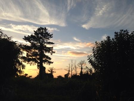 sunset tree Stock Photo