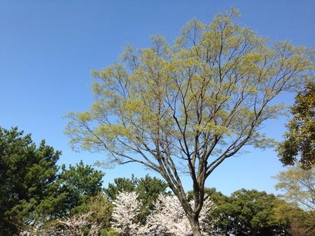 Spring tree Stock Photo