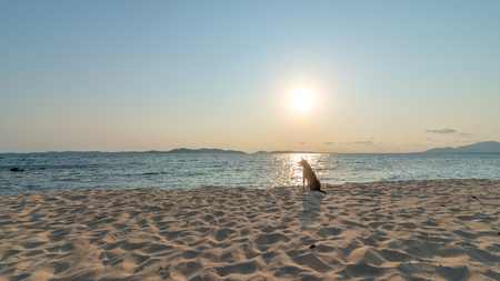Stray dog on the golden beach of the Koh Kudi a part of Samet Island in Rayong, Thailand at sunset.
