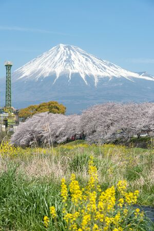 The scenery of the Urui river in springtime that plenty of sakura blooming and yellow flowers in Shizuoka, Japan.