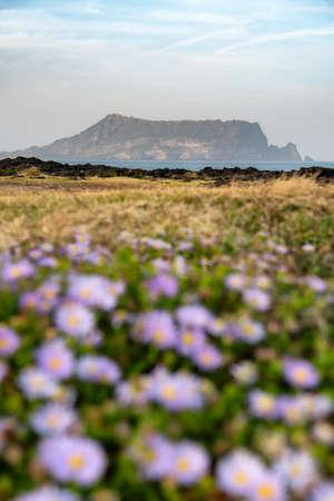 Beautiful scenery of Seongsan Ilchubong inactive volcano with blurly purple flowers foreground at Jeju island, South Korea.