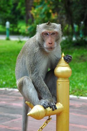 canny: Monky of jungle Stock Photo