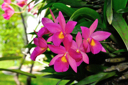 throughout: Orchids in the Garden. The orchids that bloom throughout the year. Stock Photo