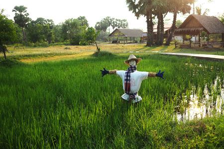field of thai: Scarecrow in rice field, Thai folk village.