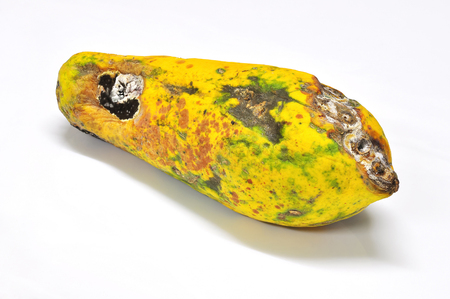 Papaya the old stored under the skin rot and mold. Foto de archivo