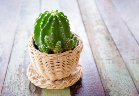Beautiful cactus in the cup vase decor on wooden table.