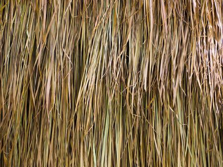 Dried Leaf Texture, haystack roof.