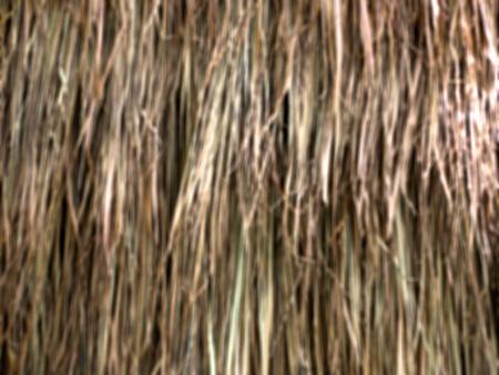 Dried Leaf blur focus Texture, haystack roof.
