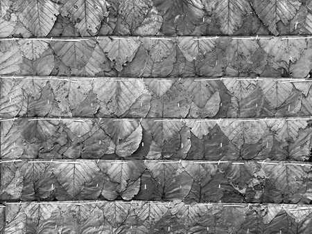 Dried Leaf Texture, haystack roof. Light and shadow.