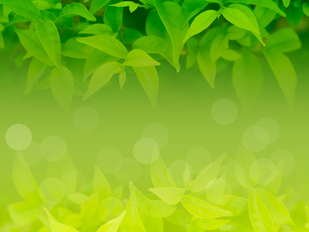 Selective soft focus on the green leaf natural background.
