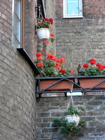 flowers on building photo