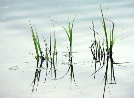 river an grass photo