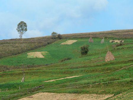 hills, haystacks, tree
