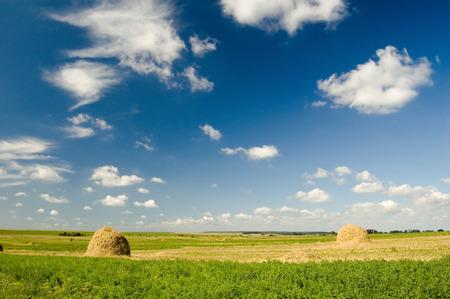 rural skyline: A peaceful meadow in summer
