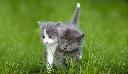 Two small cat looking around Stock Photo