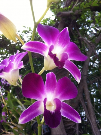 orchid flower: Orchid flower Stock Photo