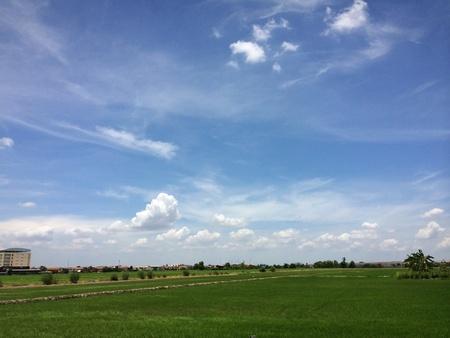 Rice seeding field and blue sky