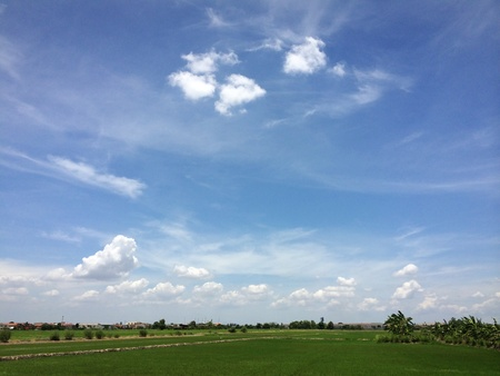 seeding: Rice seeding field and blue sky