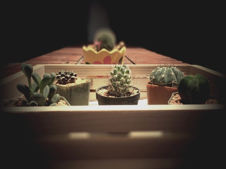 style: Cactus in utility wood retro style