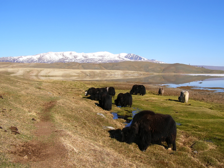 Mongolia natural landscapes, surrounded by mountains and rocks and bulls. Reklamní fotografie
