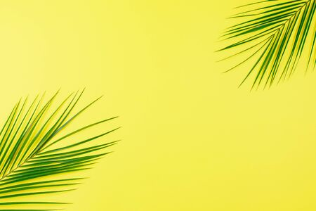 Green Tropical leaves palm tree on yellow background with space for text. Top view, flat lay.