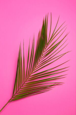 Green Tropical leaves palm tree on pink background . Top view, flat lay. Sunny summer Still life. Bright Sweet fashion Style. Minimal