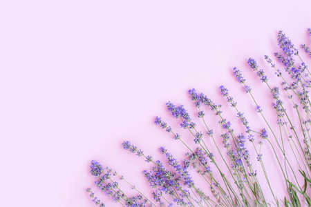 Frame made of Fresh lavender flowers on light purple background. floral background. Flat lay, top view, copy space. Flowers composition