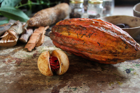 Cocoa at the island of Grenada 스톡 콘텐츠