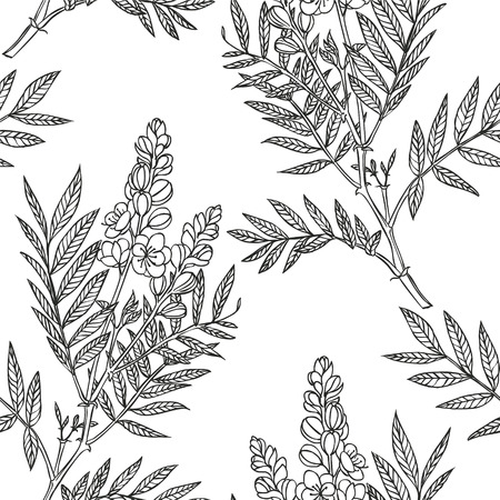 senna plant - vector seamless linear floral pattern