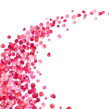白の背景にピンクのバラの花びらの渦