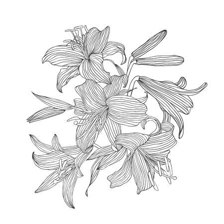 Engraving hand drawn illustration of flower lily Illusztráció