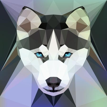 poligonos: Ilustración del vector - Cara de un perro Husky