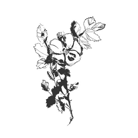 briar: Vector hand drawing plant briar flower on a white background