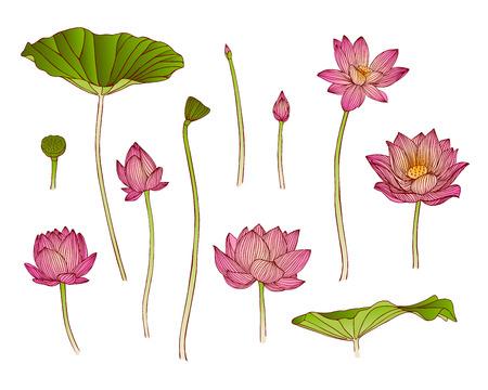 dibujos de flores: ilustración vectorial de flor de loto