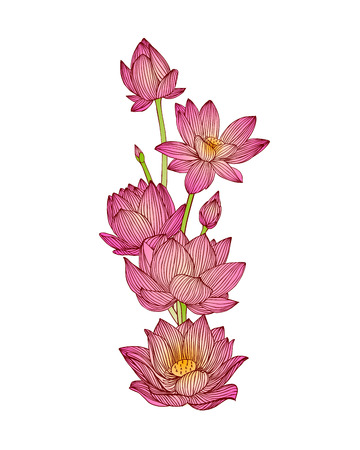 vector illustration of lotus flower bouquet