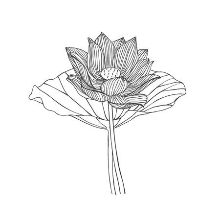 Engraving hand drawn illustration of lotus flower Illustration
