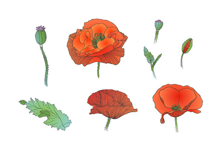 poppy flowers: Poppy flowers collection