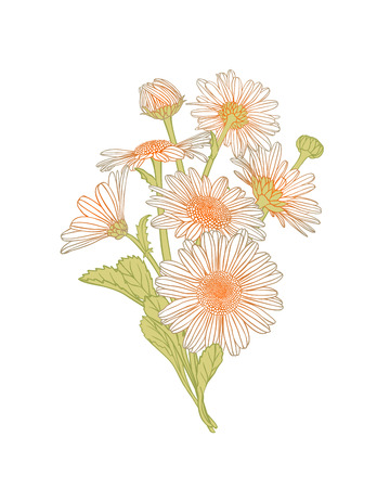 chamomile: chamomile flowers bouquet Illustration