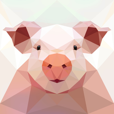 sow: Face of a pig