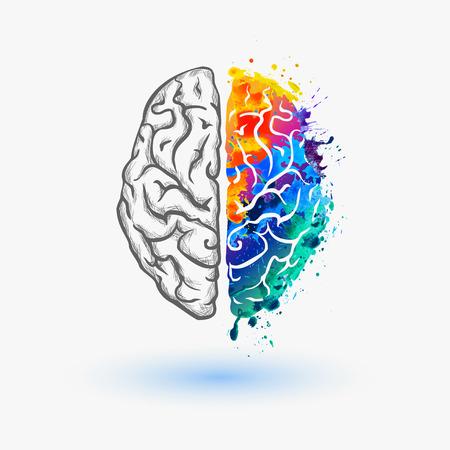 tvůrčí: mozkové hemisféry