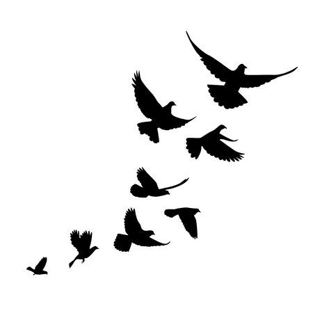A flock of birds pigeons go up. Black silhouette on a white background. Stock Illustratie
