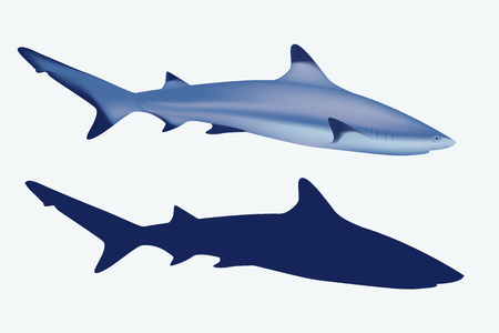silhuette: Realistic mesh illustration and silhuette of grey reef shark