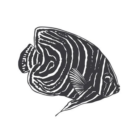 juvenile emperor angel fish (lat. Pomacanthus Imperator)