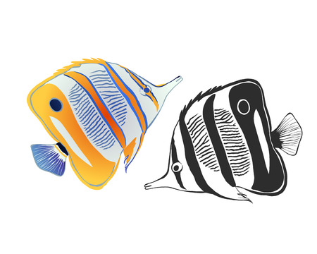 tweezers: Butterfly fish tweezers helmon. Color and black-and-white Illustration