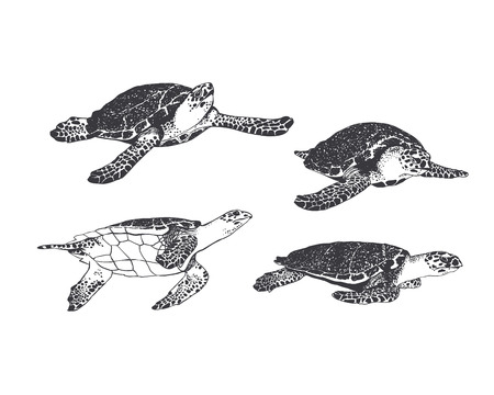 indian fish: Set. Turtle in 4 different angles