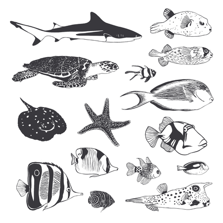 Vector Black and white Collection of sea and ocean inhabitants. Fish, shark, turtle.